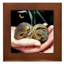 Baby Squirrel - Framed Tile