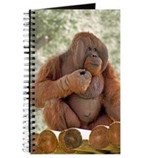 Orangutan Talukan 1 Journal