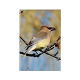 Cedar Waxwing Rectangle Magnet (10 pack)