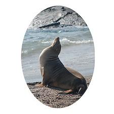 Sea Lion 2 Oval Ornament