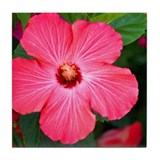 Hot Pink Hibiscus Tile Coaster