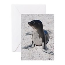 Sea Lion 4 Greeting Cards (Pk of 10)