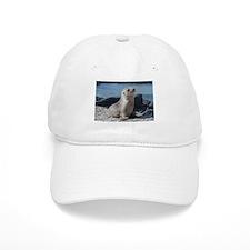 Sea Lion 3 Baseball Cap