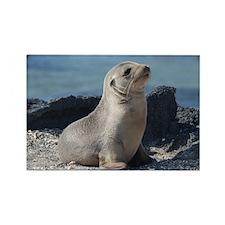 Sea Lion 3 Rectangle Magnet