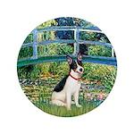 Bridge / Rat Terrier 3.5