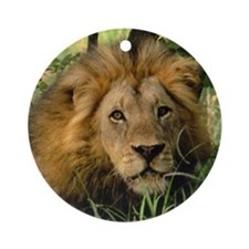 """Big African Lion"" Ornament (Round)"