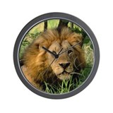 """Big African Lion"" Wall Clock"