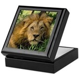 """Big African Lion"" Keepsake Box"