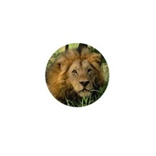 """Big African Lion"" Mini Button"