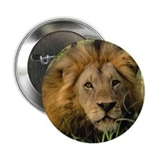 """Big African Lion"" Button"