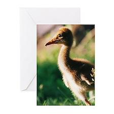 Unique Sandhill crane Greeting Cards (Pk of 20)