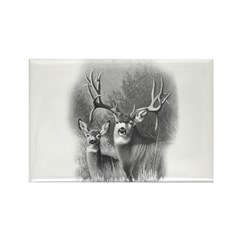 Mule Deer Rectangle Magnet