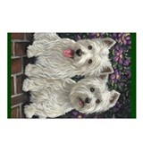 Westie dogs Postcards
