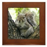 Tree Squirrel Framed Tile