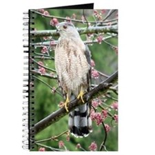 Cooper's Hawk Journal
