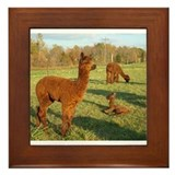 Cute Animals wildlife Framed Tile
