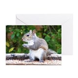 Squirrel Looking Greeting Cards (Pk of 10)