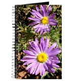 Tansy Aster Journal