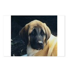 Anatolian Shepherd Dog Postcards (Package of 8)