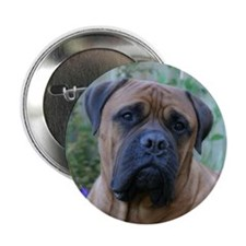 Thoughtful Bull Mastiff Button