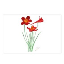 Scarlet Larkspur Postcards (Package of 8)