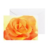 Birthday Cards Orange Rose (Pk of 10)