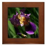 Iris Framed Tile