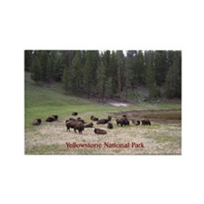 Yellowstone Bison Rectangle Magnet