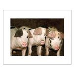 Jersey Pigs Small Poster