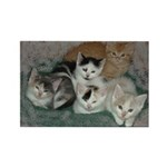 Kittens Rectangle Magnet (100 pack)