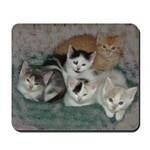 Kittens Mousepad
