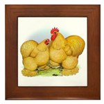 Buff Cochin Rooster and Hen Framed Tile