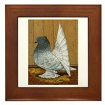 Indian Fantail Pigeon Framed Tile