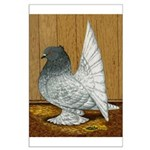 Indian Fantail Pigeon Large Poster
