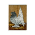 Indian Fantail Pigeon Rectangle Magnet (10 pack)