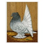 Indian Fantail Pigeon Small Poster