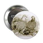 Frillback Pigeons 2.25