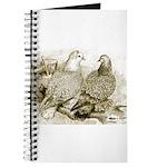 Frillback Pigeons Journal