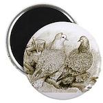 Frillback Pigeons Magnet