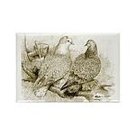 Frillback Pigeons Rectangle Magnet
