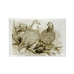 Frillback Pigeons Rectangle Magnet (100 pack)