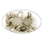 Frillback Pigeons Oval Sticker