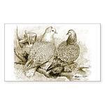Frillback Pigeons Rectangle Sticker