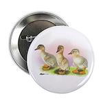 Buff Ducklings Button