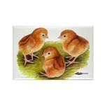 Red Leghorn Chicks Rectangle Magnet (100 pack)