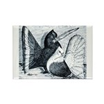 Indian Fantail Pigeons Rectangle Magnet