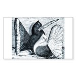 Indian Fantail Pigeons Rectangle Sticker