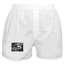 Cute Snail trail Boxer Shorts