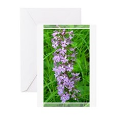 Purple Fringed Orchis Greeting Cards (Pk of 10)