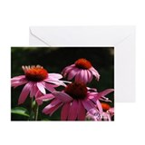 Coneflower Greeting Cards (Pk of 10)